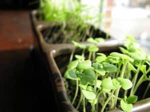 zielone rośliny w skrzynkach