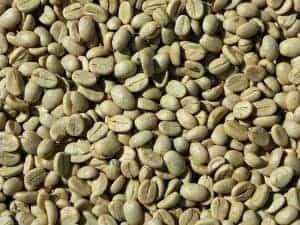 ziarna zielonej kawy