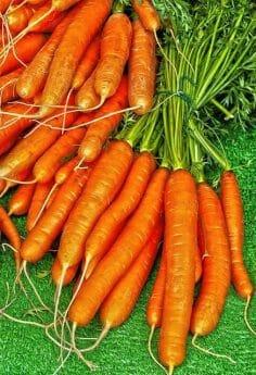 pęczek marchewki