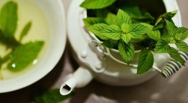 zioła w czajniczku