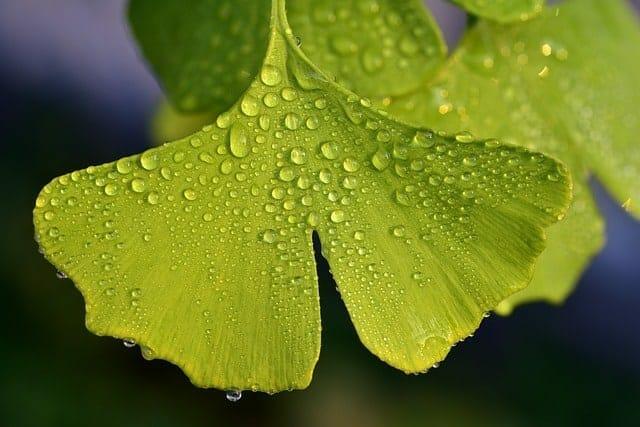 zielone liście pokryte rosą