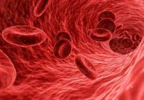 czerwone ciałka krwi