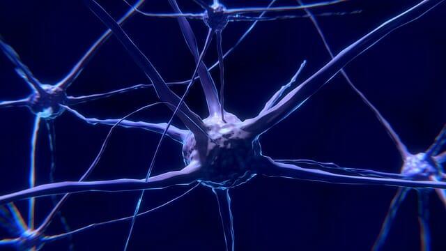 neuron, komórka nerwowa